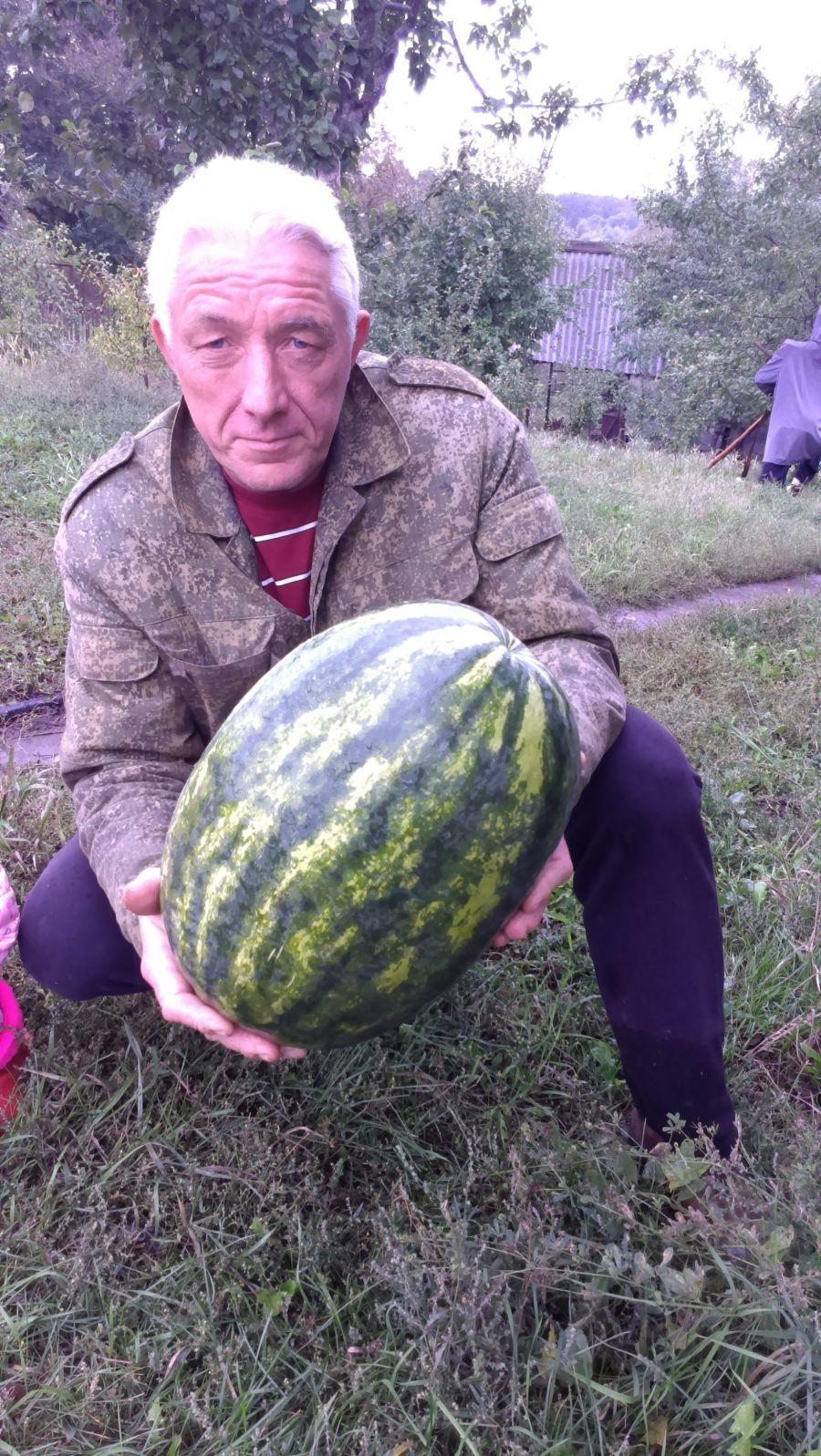 Выращивание арбузов в башкирии 3